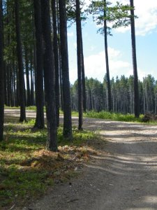 forestcurve